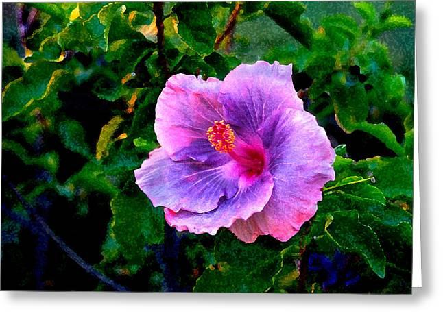Blue Moon Hibiscus Greeting Card by Steve Karol