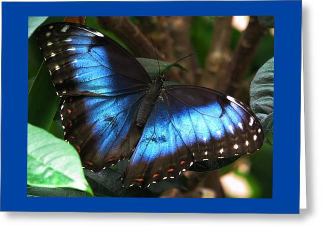 Blue Morph Greeting Card