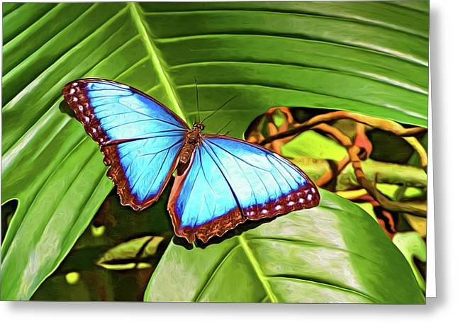 Blue Morpho Butterfly 2 - Paint Greeting Card