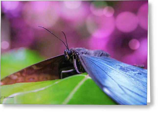 Blue Morpho  Butterfly 2 Greeting Card