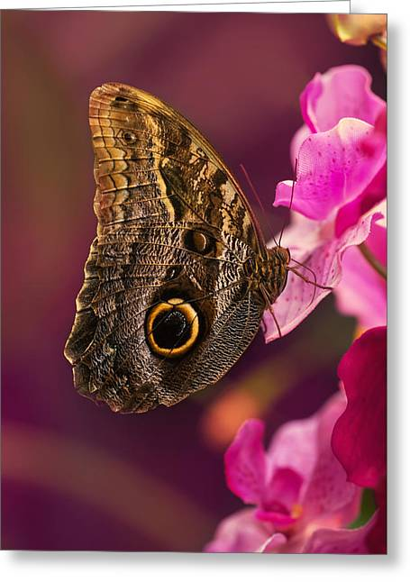 Blue Morpho Butterly On Pink Flowers Greeting Card