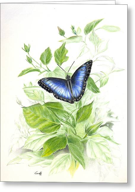 Blue Morpho On Hibiscus Greeting Card
