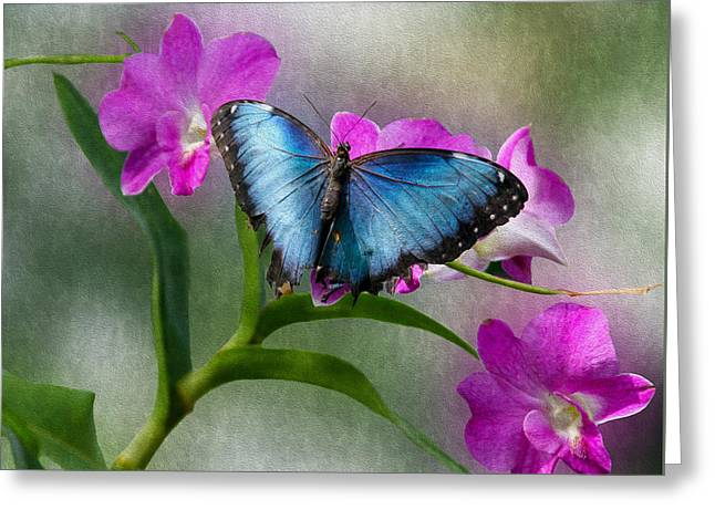 Blue Morpho With Orchids Greeting Card