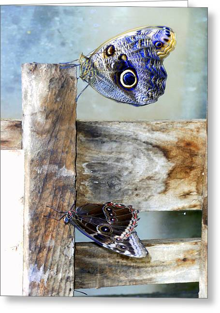 Blue Moths Greeting Card by Mindy Newman