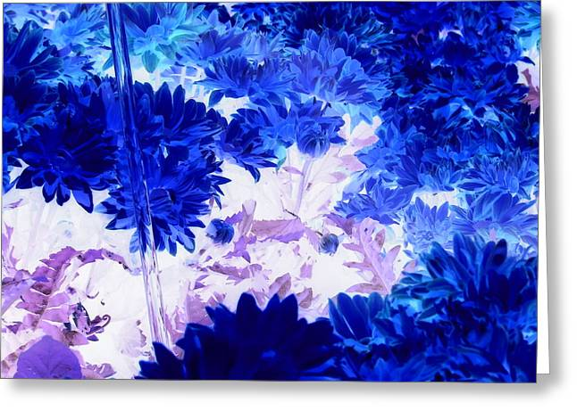 Blue Mums And Water Greeting Card