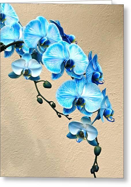Byron Varvarigos Greeting Cards - Blue Mystique Orchid Greeting Card by Byron Varvarigos