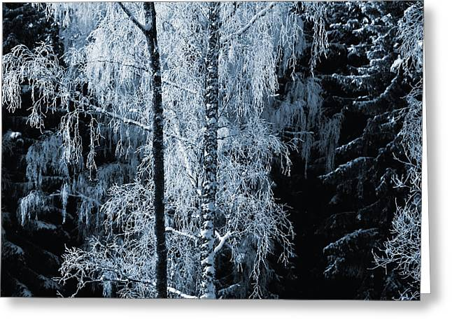 Blue Nature Winter Scenery Greeting Card
