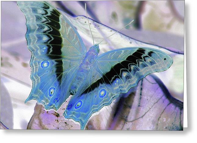 Blue Negative Greeting Card by JAMART Photography