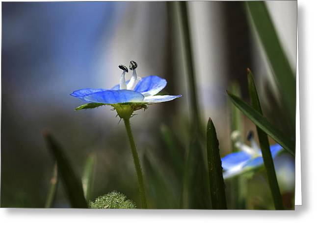 Blue On Green Greeting Card by John Ellis