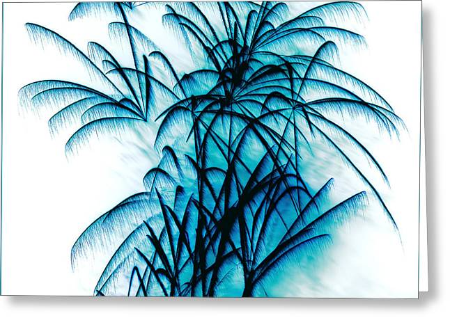 Blue Palm Fireworks By Kaye Menner Greeting Card by Kaye Menner