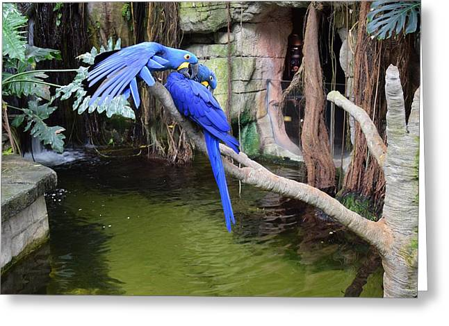 Blue Parrots Greeting Card