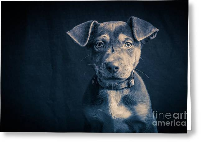Blue Period Puppy Greeting Card