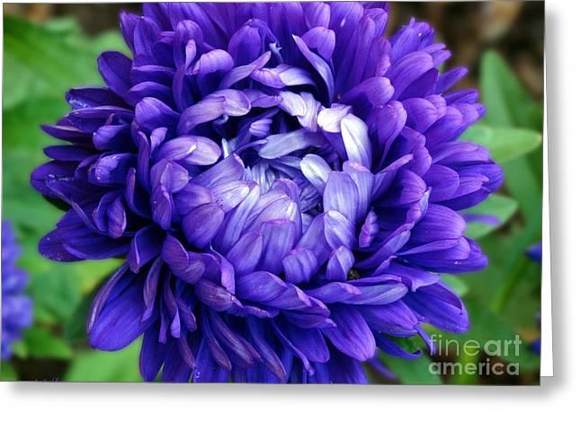 Blue Petals Greeting Card
