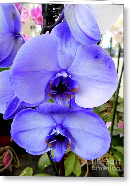 Blue Phalaenopsis Orchid Greeting Card