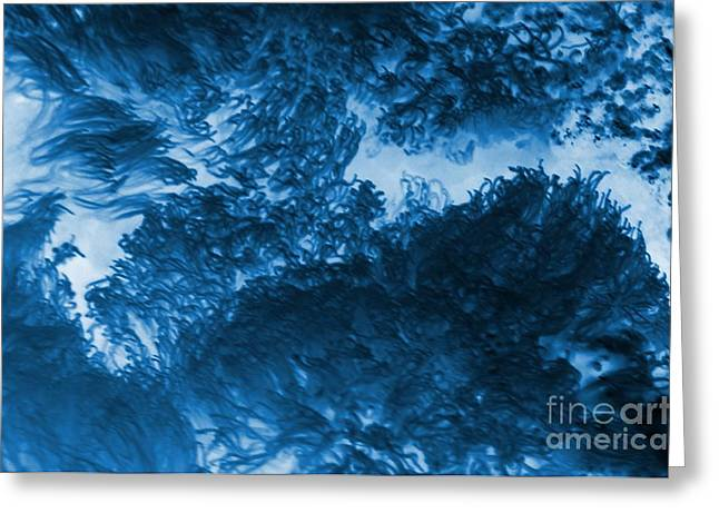Blue Plants Greeting Card by Kathleen Struckle