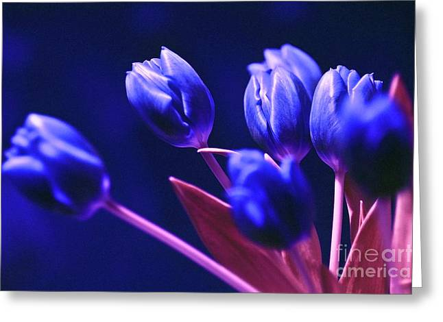 Greeting Card featuring the photograph Blue Poetry by Silva Wischeropp