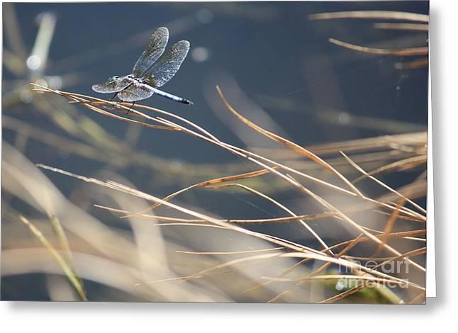 Blue Pond Greeting Card by Carol Groenen