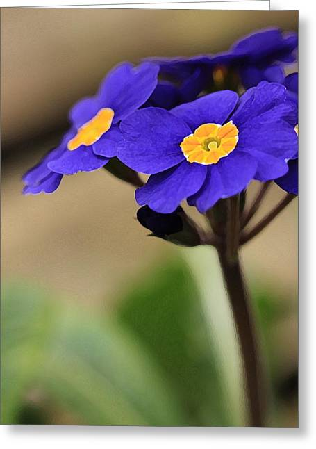 Blue Primrose Greeting Card by Amy Neal