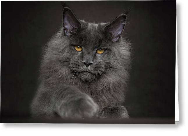 Greeting Card featuring the photograph Blue Prince by Robert Sijka
