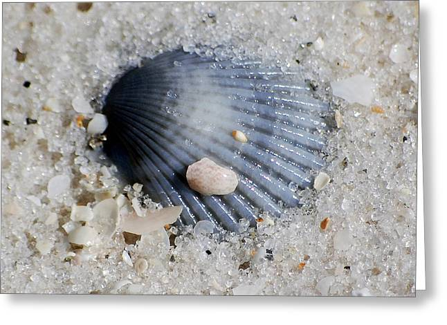 Blue Purple Ribbed Sea Shell Macro Buried In Fine Wet Sand Square Format Greeting Card