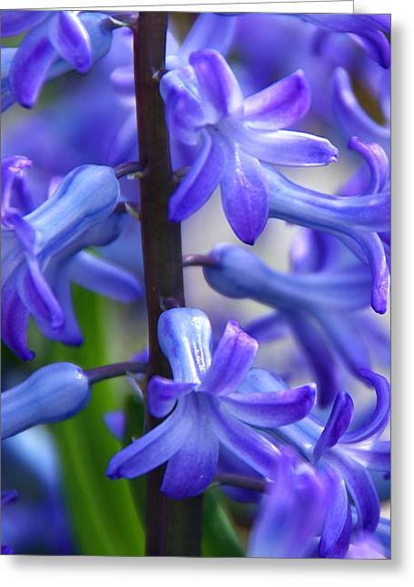 Greeting Card featuring the photograph Blue Rhapsody by Byron Varvarigos
