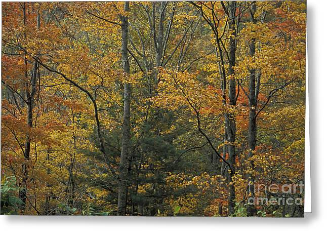 Blue Ridge Color Greeting Card by Stan and Anne Foster