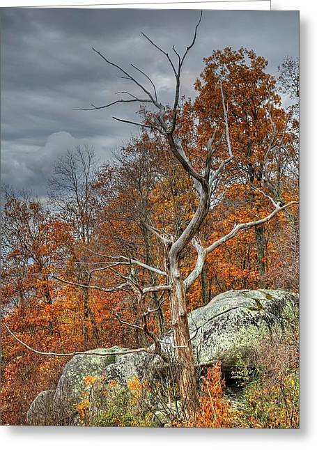 Blue Ridge Parkway Tree 2 Greeting Card by Todd Hostetter