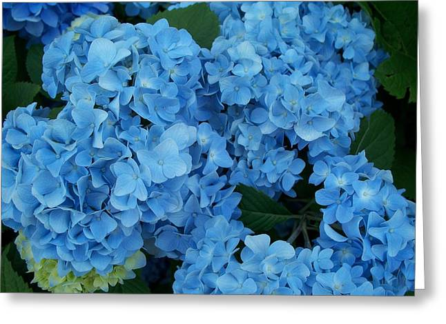 Blue Greeting Card by Rosanne Bartlett