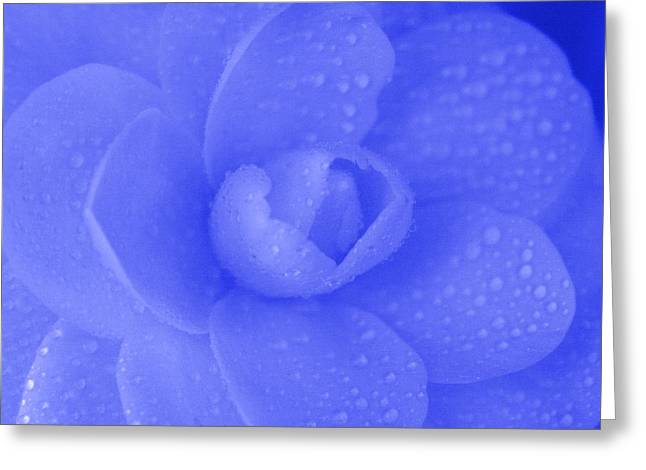 Blue Rose Greeting Card