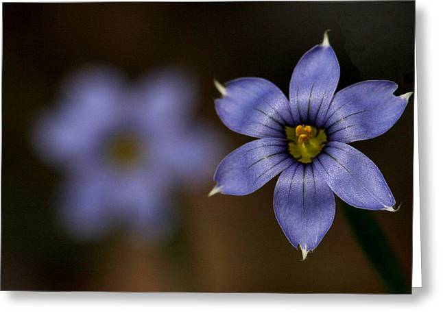Blue Sixpetal Greeting Card