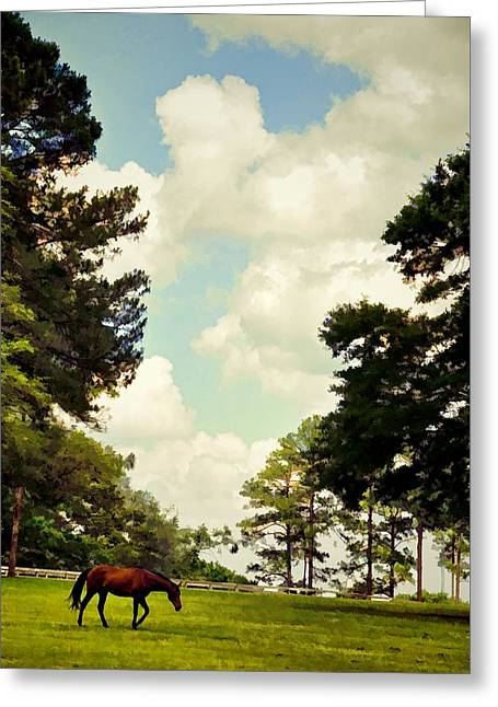 Blue Skies And Pines Greeting Card by Jan Amiss Photography
