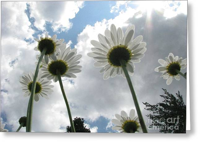 Greeting Card featuring the photograph Blue Skies by Misha Bean