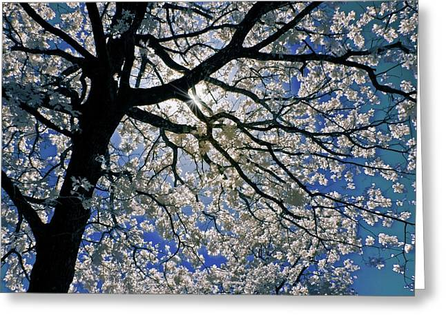 Greeting Card featuring the photograph Blue Skies Smiling At Me by Linda Unger