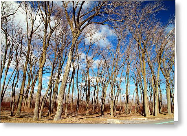 Greeting Card featuring the photograph Blue Sky And Trees by Valentino Visentini