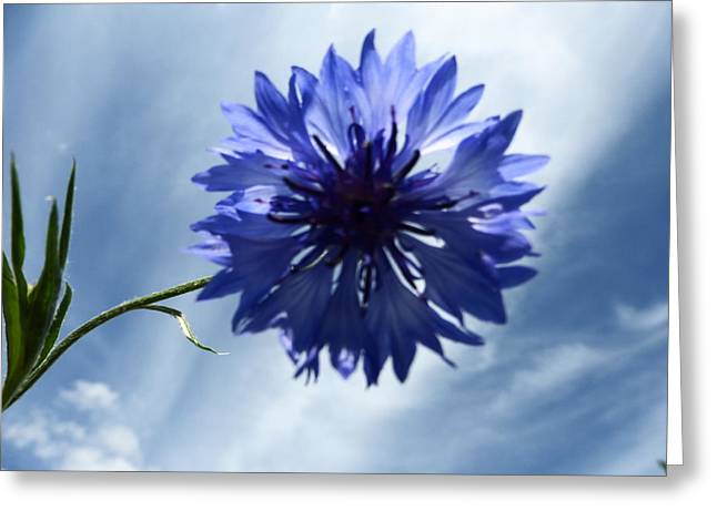 Blue Sky Blue Flower Greeting Card by Tina M Wenger