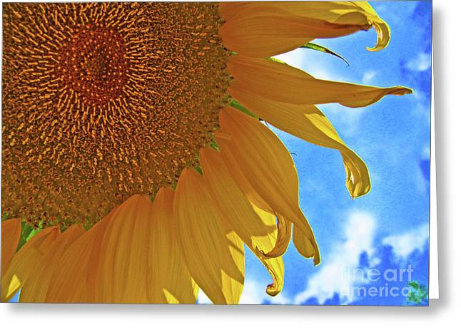 Blue Sky Sunflower Greeting Card