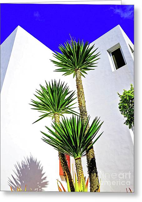 Tall Palms And Blue Sky Greeting Card by Wilf Doyle