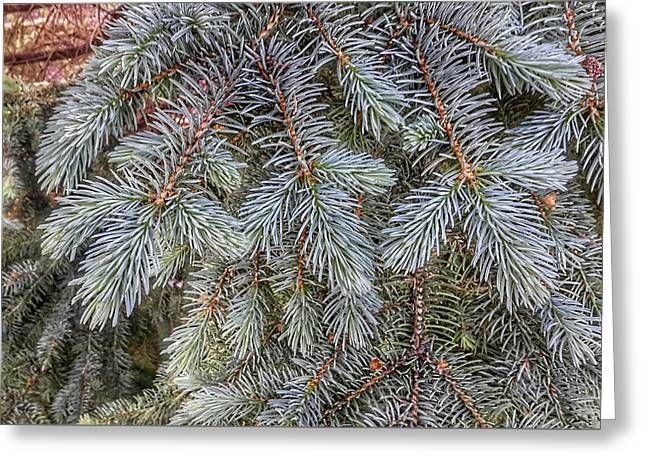 Blue Spruce Bling Greeting Card
