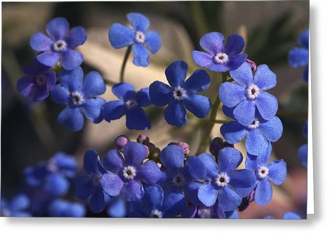 Blue Sterner Greeting Card