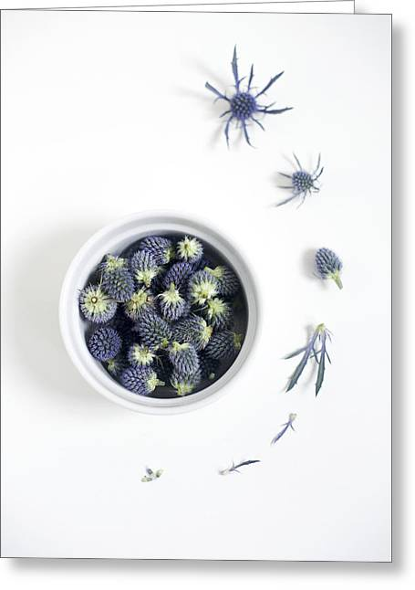 Blue Thistle Still Life Greeting Card