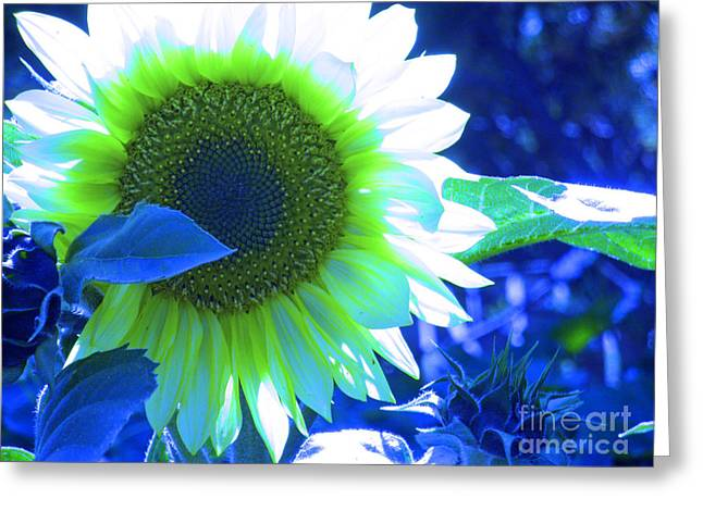 Blue Tinted Sunflower Greeting Card