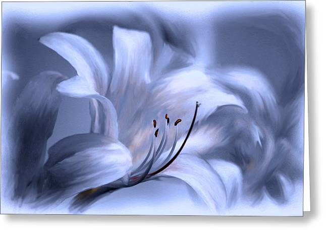 Blue Tinted Swirl Lily Greeting Card by Jim  Darnall