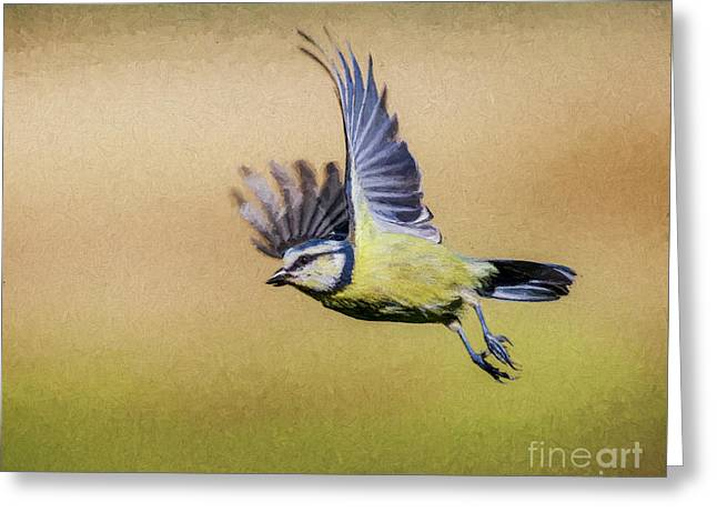 Blue Tit In Flight Greeting Card