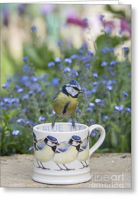 Blue Tit Mug Greeting Card by Tim Gainey