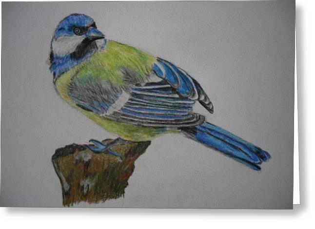 Blue Tit Greeting Card by Tanya Patey
