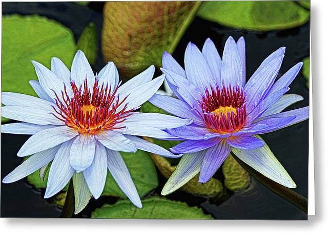 Greeting Card featuring the photograph Blue Water Lilies by Judy Vincent