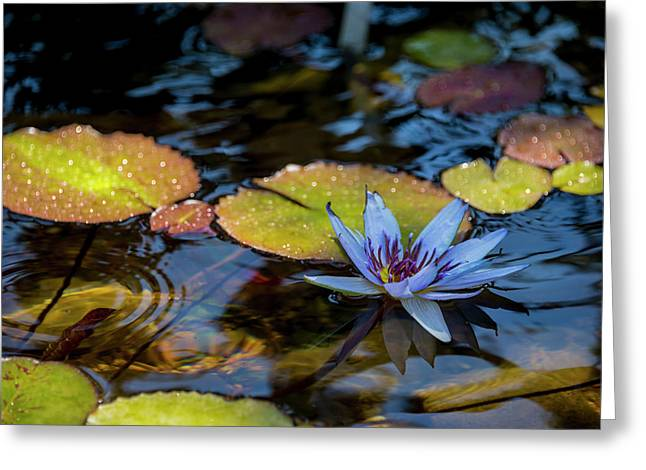 Blue Water Lily Pond Greeting Card