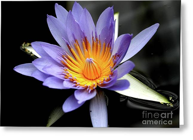 Blue Water Lily Pond Flower . 7d5726 Greeting Card by Wingsdomain Art and Photography