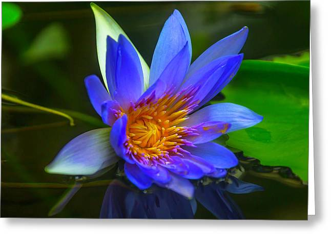 Blue Waterlily In Pond Greeting Card by Garry Gay