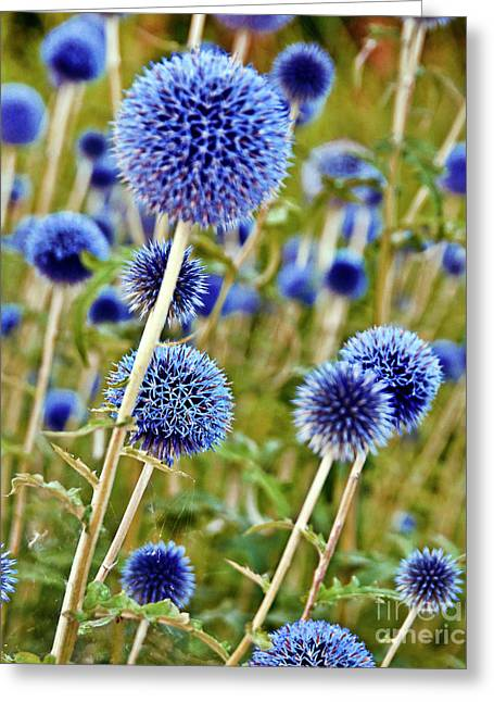 Blue Wild Thistle Greeting Card
